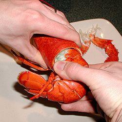 Ricetta Gratin di aragoste in salsa