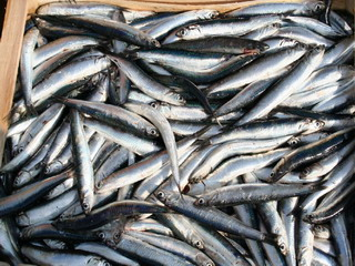 Ricetta Insalatina di alici marinate