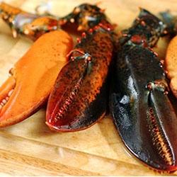 Ricetta Aragosta in salsa di dragoncello