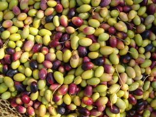 Ricetta Olive nere con il pesto