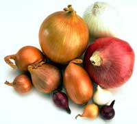 Ricetta Rigatoni con cipolle