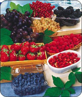Ricetta Insalata ai frutti di bosco