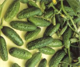 Ricetta Zuppa di cetriolini sott'aceto