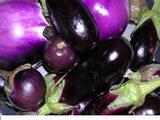 Ricetta Frittelle di melanzane  - variante 2